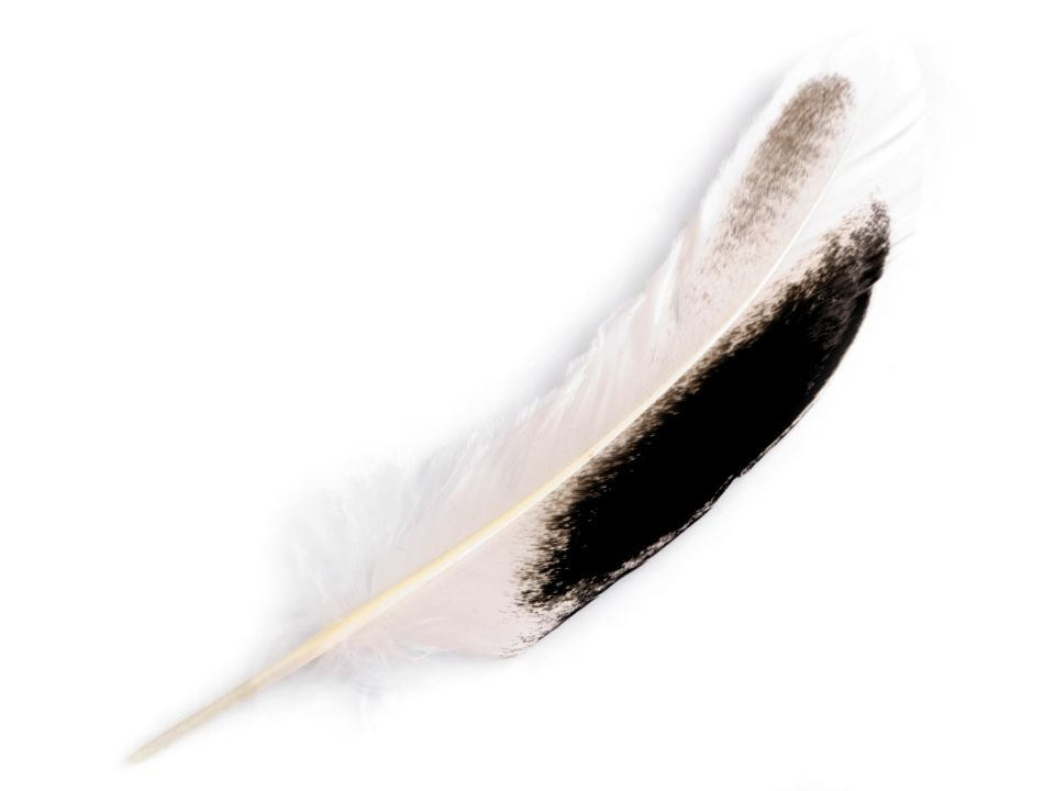 Spalvas Duck Feathers length 10-14 cm