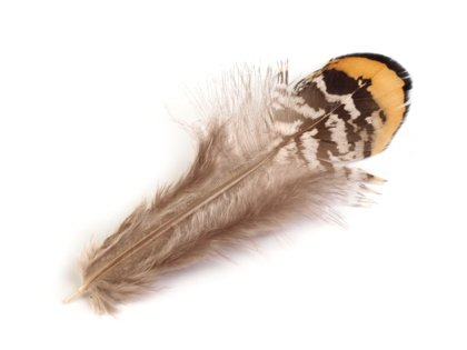 Spalvas Ornamental Pheasant Feather length 4.5-8.5 cm
