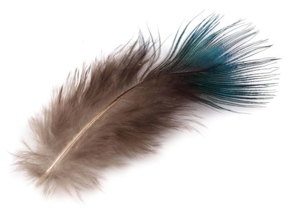 Spalvas Decorative Peacock Feathers 5-8 cm