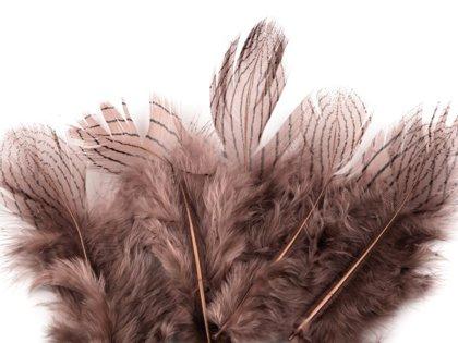 Spalvas Pheasant feathers length 5 - 11 cm