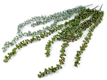 Dekoratīvie augi Trailing Succulent Plant